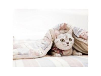 Для чего нужны тяжелые одеяла?